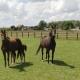 Nieuwsgierige paarden in de wei