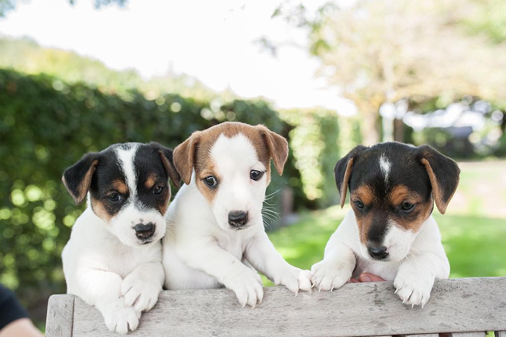 hele lieve puppy