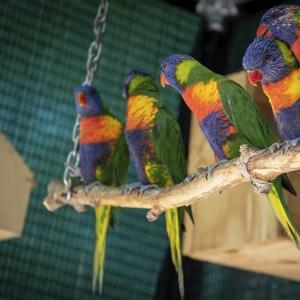 het beste voer voor vogels
