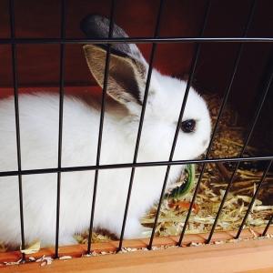 Schattig konijn in een hok