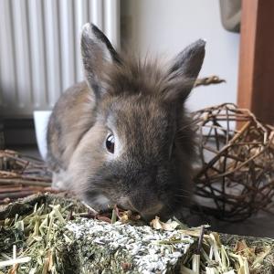 Schattig grijs konijn dat knaagt