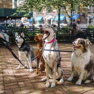 Lieve honden